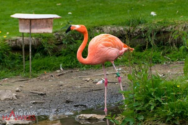 Pink Flamingos 3