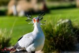 Dr No Secretary Bird 1