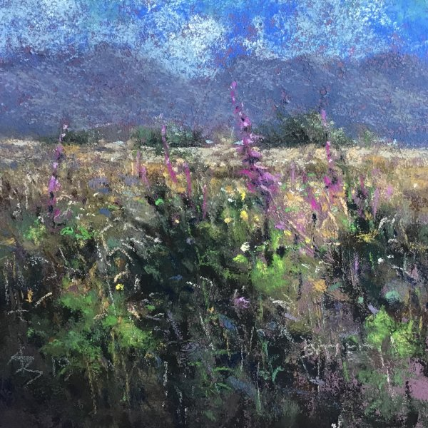 Late Summer wild meadow