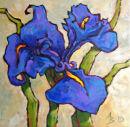 """Iris Fresco"""