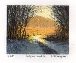 Dalgan Walk