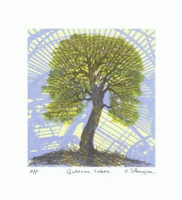 Quercus Suber.
