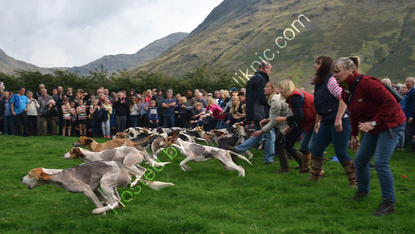 Highly Commended - Photojournalism - Mike Woodcock - 'Hound Trailing'