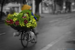Flower of Hanoi