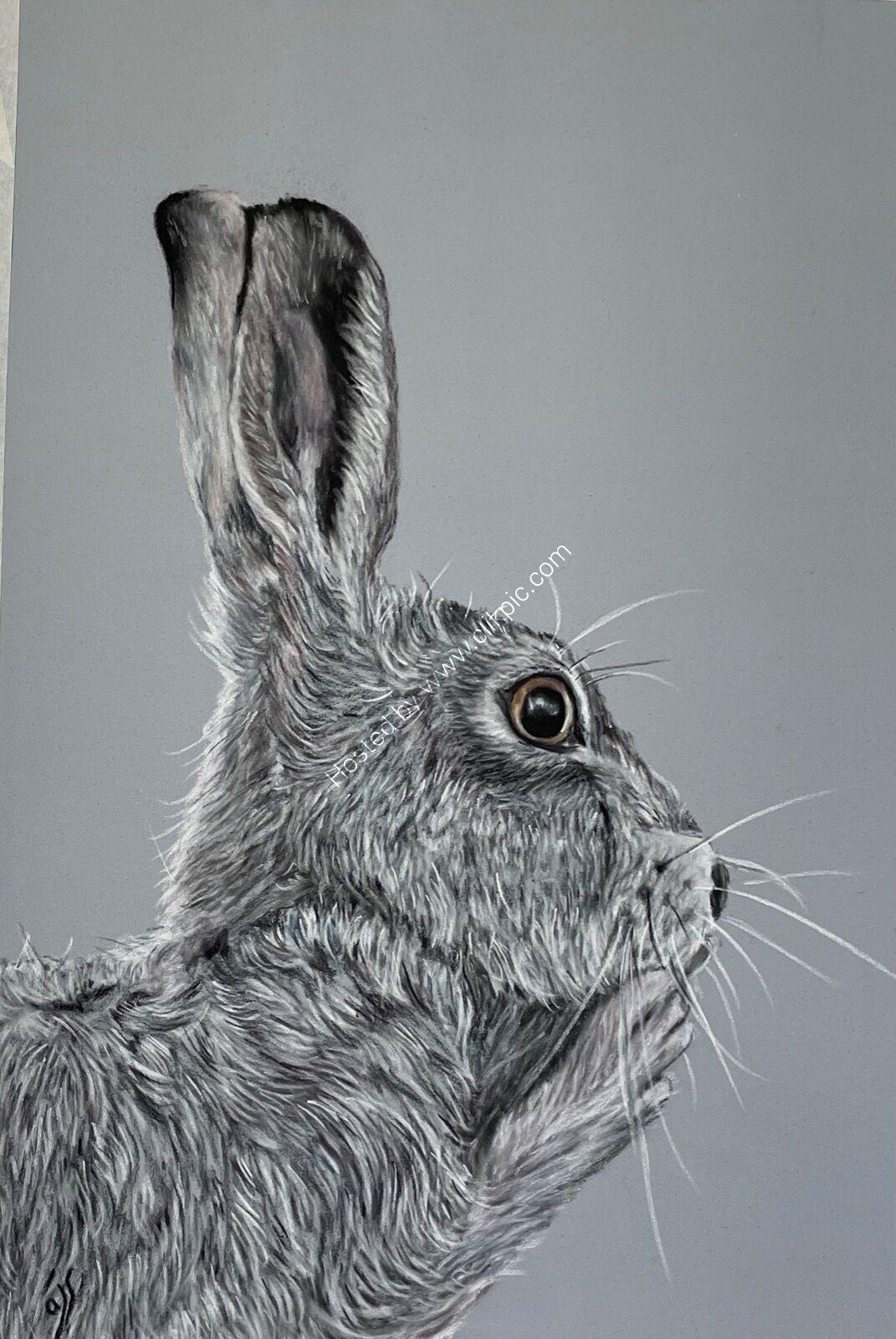 Psst… I'm hare!