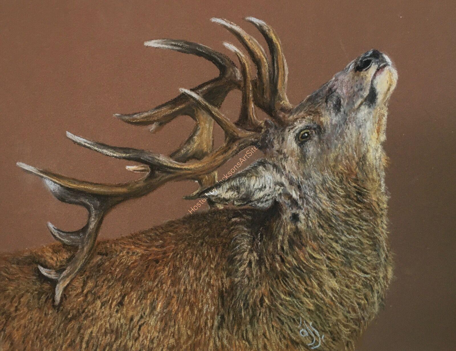 Chin Up Deer