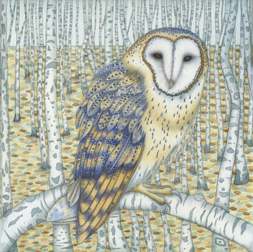 Barn Owl Among the Birches (print and card)