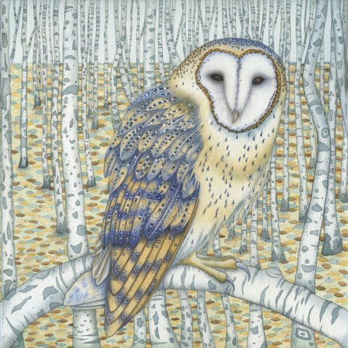 Barn Owl in the Birches