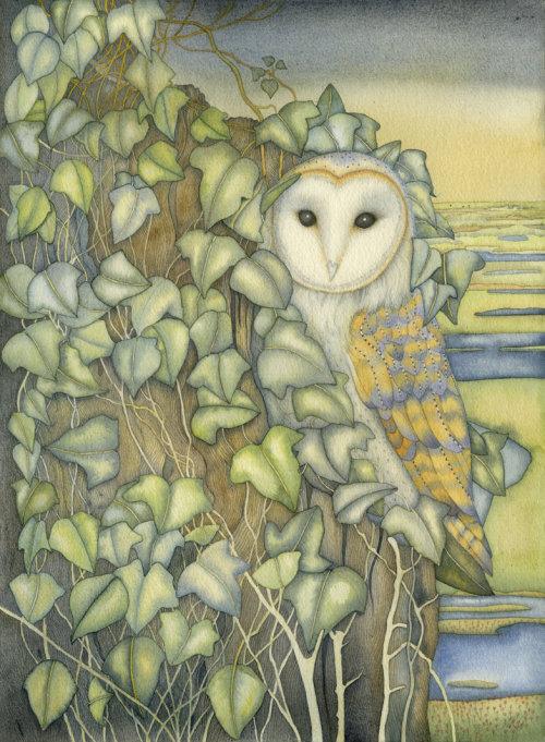 Barn Owl at Stifkey (print)