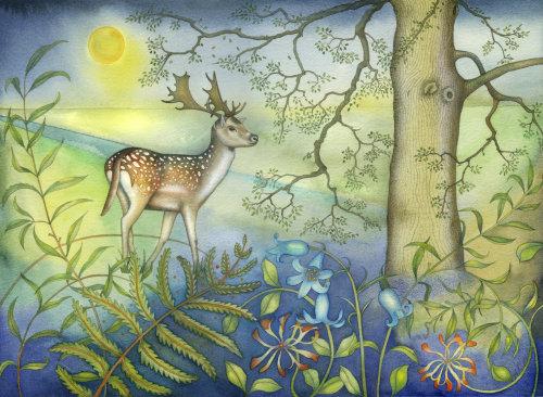 Fallow Deer. (print)