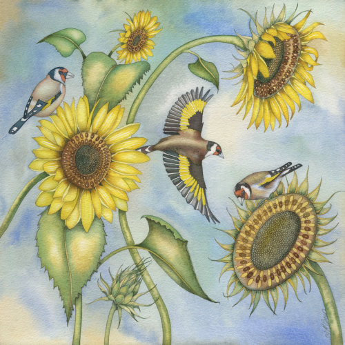 Goldfinches and Sunflowers (print)