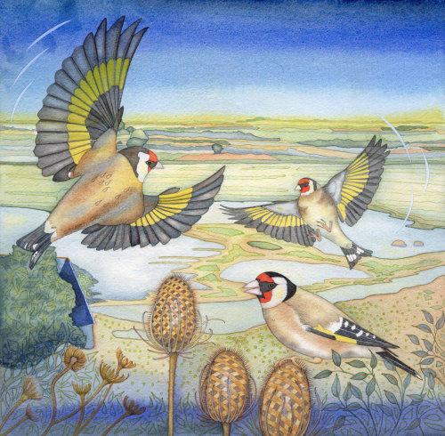 Goldfinches at Overy Staithe (print).