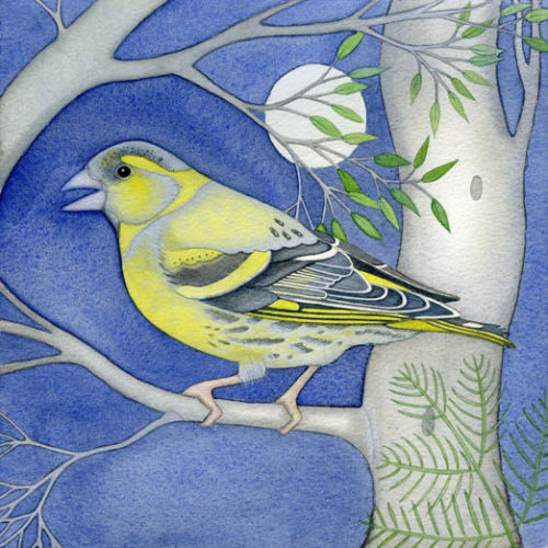 Siskin (print and card)