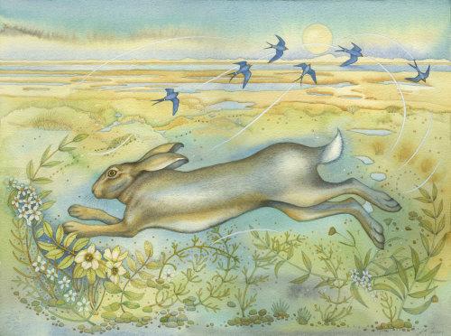 Hare on the Saltmarsh (print and card)