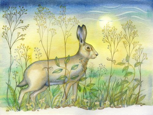 Listening Hare (print)