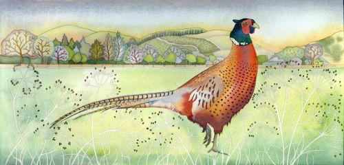 Panoramic Pheasant (print)