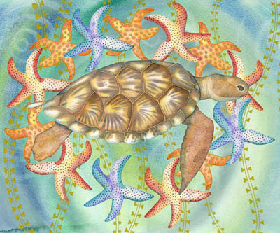 Star Turtle (NNUH)