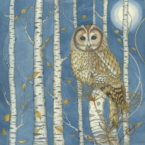 Tawny Owl in the Birches (recent commission)