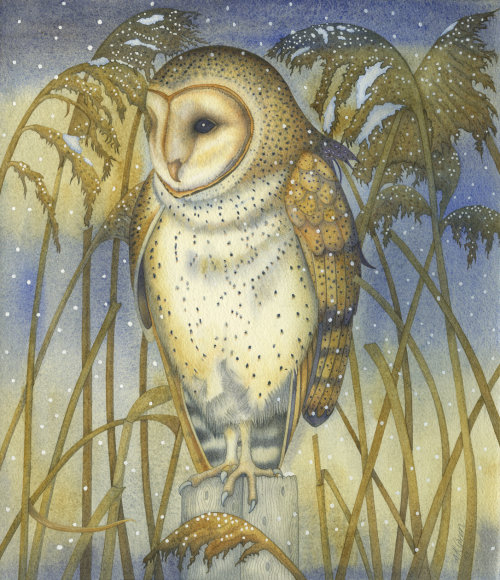 The Tender Owl (print and card)