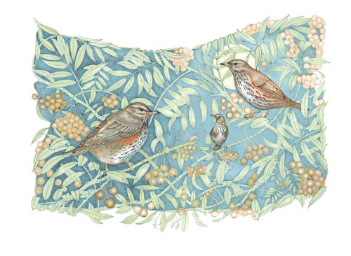 Redwings and Rowan (print)