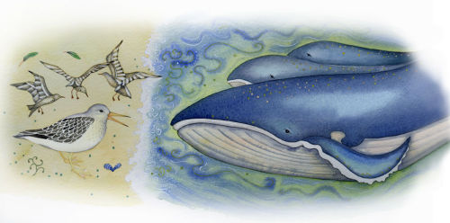 The Whale and the Sandpiper (book illustration)