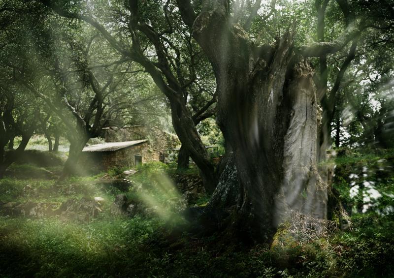 Where the Hobbits live!