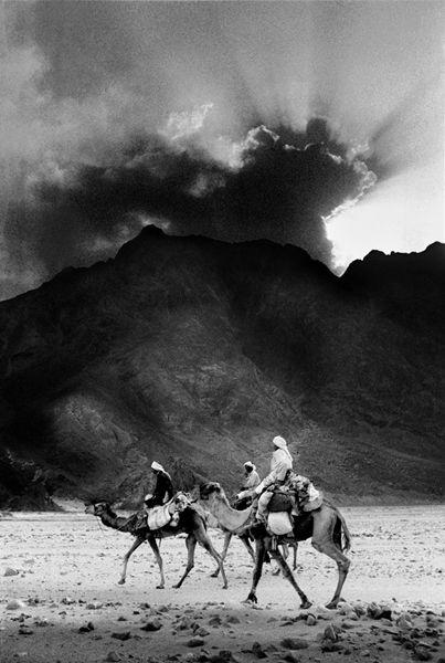Camels and sunburst