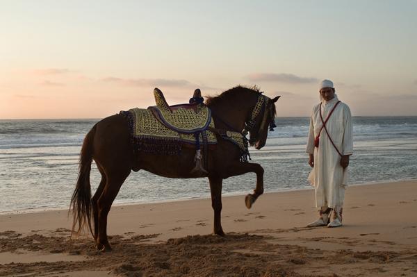 Fantasia cavalier and his horse