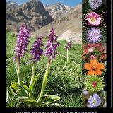 Toubkal National Park Poster Flora
