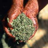 holding herbs