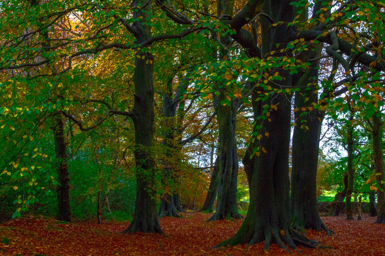 Sabden Woods