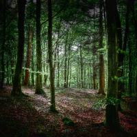 hameldon woods