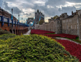 tower of london and the poppies