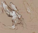 Anatomy Online 4