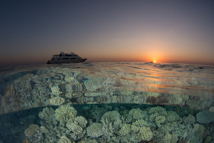 Under over, Red Sea