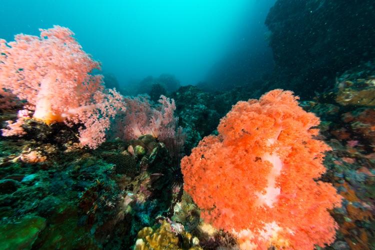 Reef scene, Malapascua