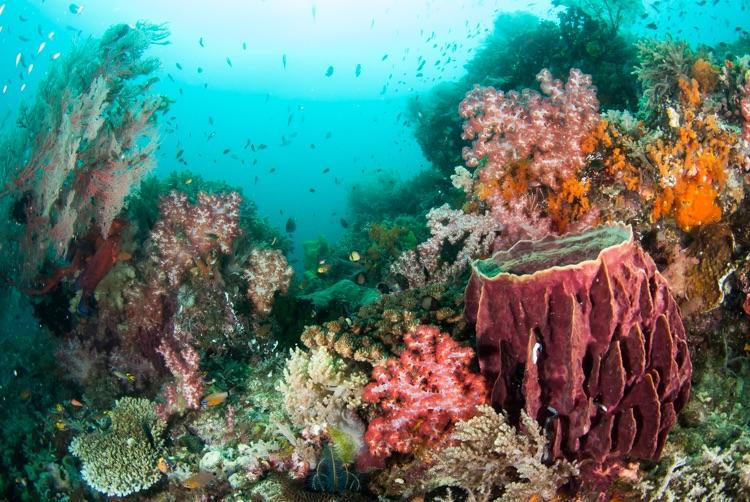 Reef scene, Raja Ampat