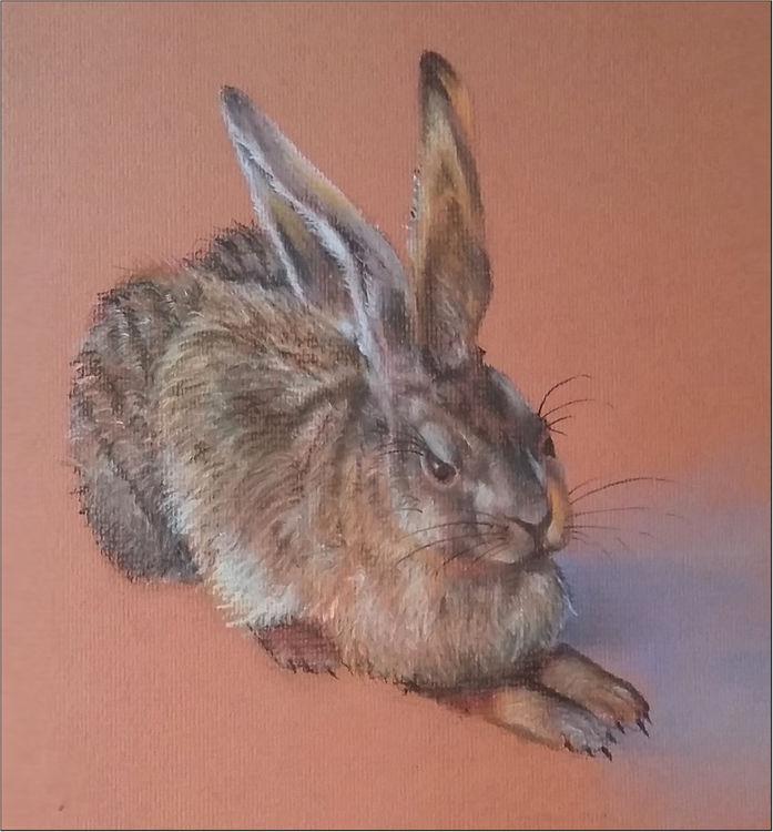 Durer's Hare