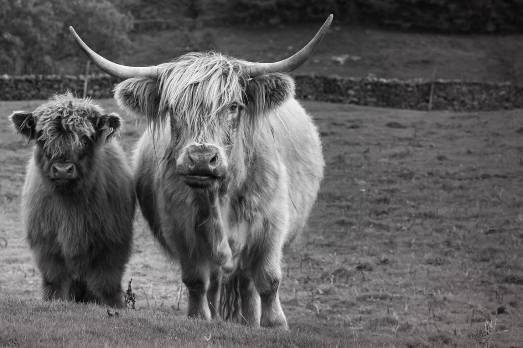 Cumbria 2