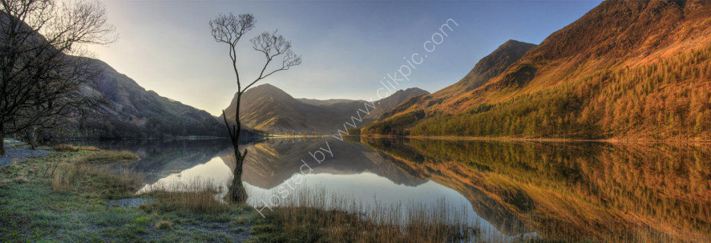 lake district photo The Buttermere tree