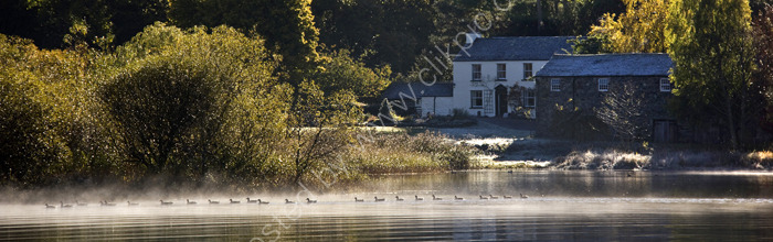 lake district photo cottage on derwentwater with geese