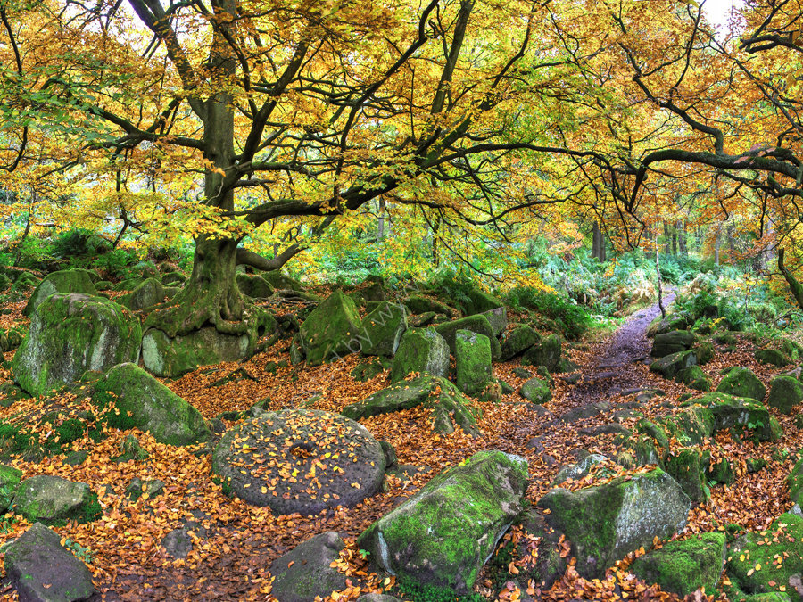 peak district photo padley gorge millstone new