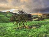 peak district photo shutlingsloe,wildboarclough tree