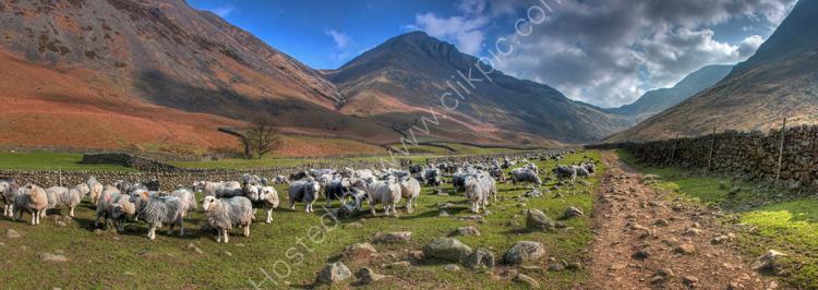 lake district photo wastwater sheep