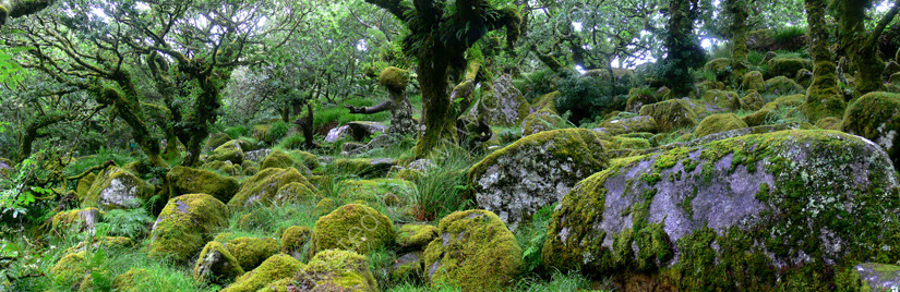 wistmans wood dartmoor devon