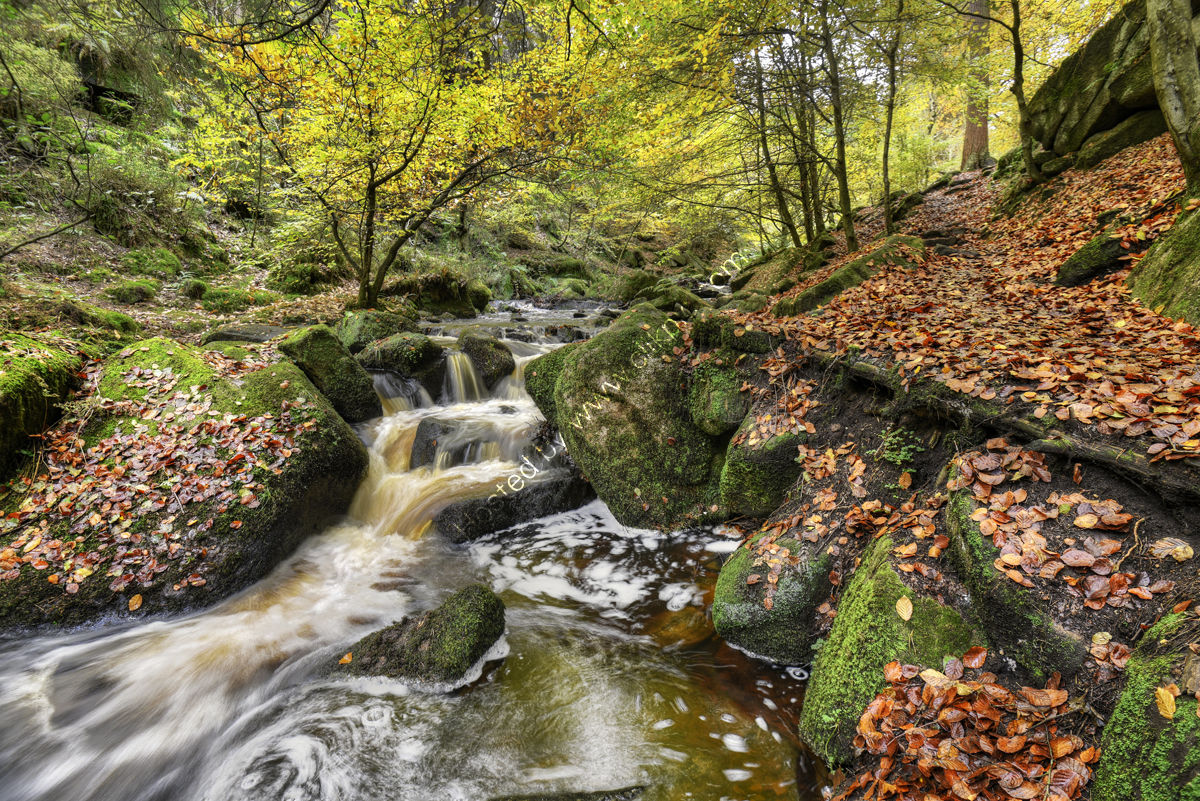 Peak District Photo Wymning Brook Autumn