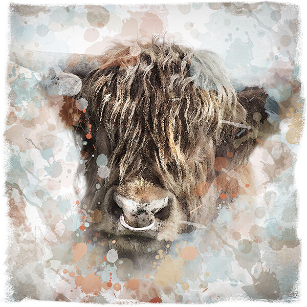 Letham Cow