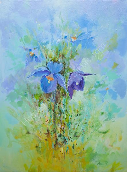 Mecanopsis Blue 2