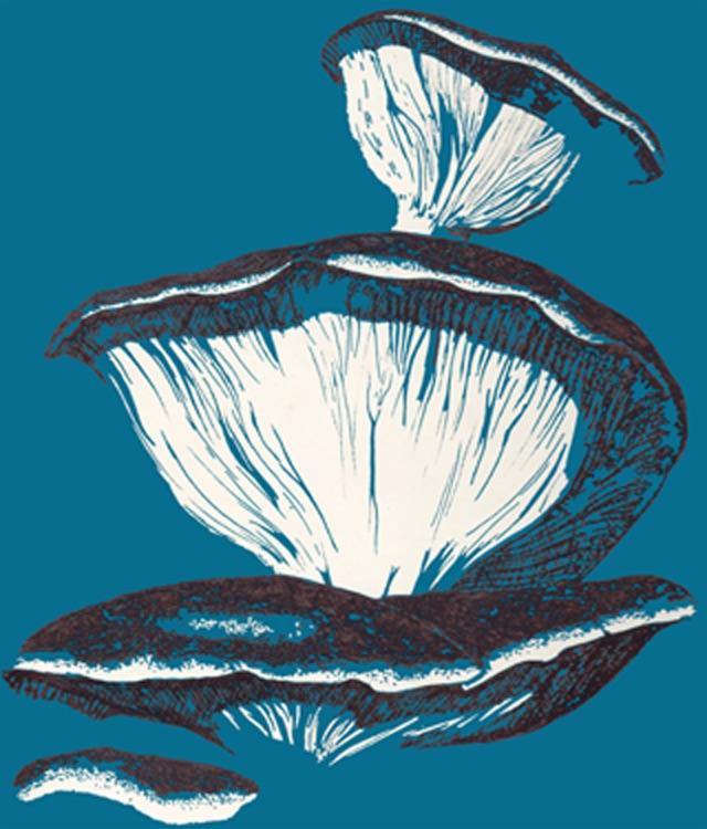 Fungi sketch by Alex Gould