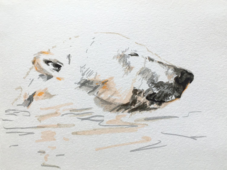 Polar bear off Svalbard
